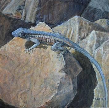 Sandra Lytch - Lizard on Rock