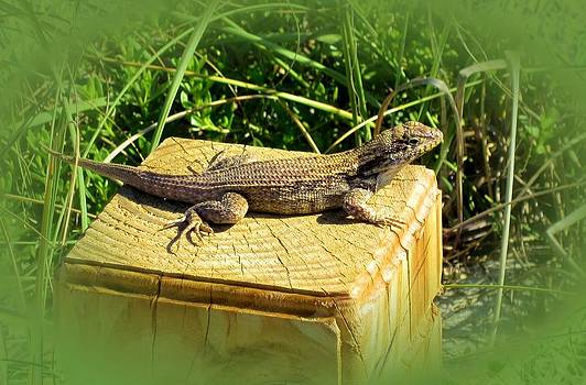 MTBobbins Photography - Lizard Post