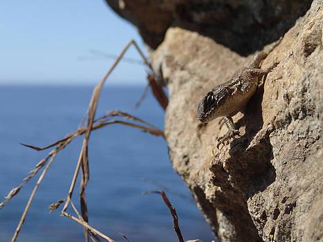Lizard by Tyler Lucas