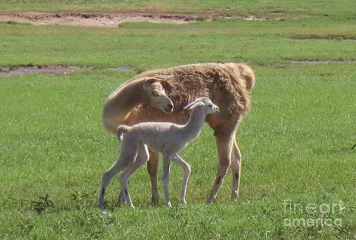 LNE KIRKES - Llama LOVE