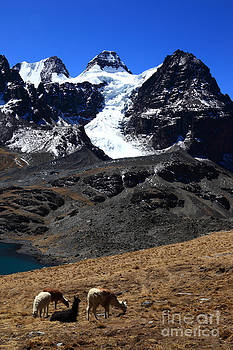 James Brunker - Llamas and Mt Condoriri Bolivia