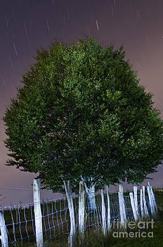 Agus Aldalur - lluvia de estrellas sobre el arbol