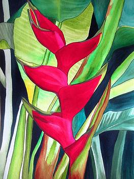 Lobster Claw Heliconia by Sacha Grossel