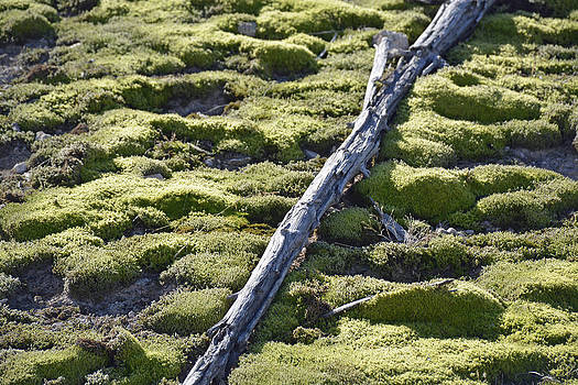 Log and Thermal Moss in Autumn Sunlight in Yellowstone by Bruce Gourley