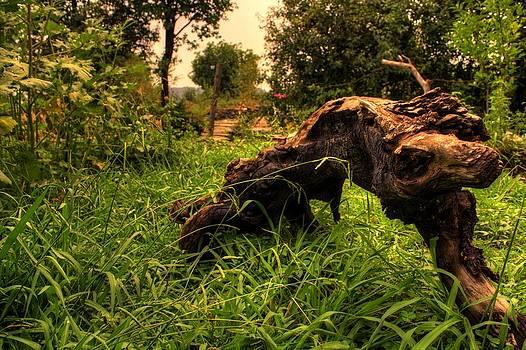 Log in the jungle by Vishal Kumar