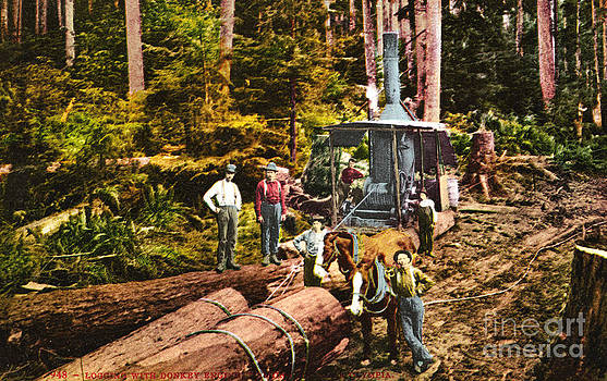 California Views Mr Pat Hathaway Archives - Logging with steam Donkey Engine near Olympia Washington circa 1900