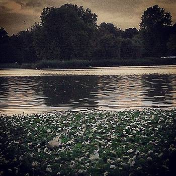 #london #hydepark #river #green by Abdelrahman Alawwad