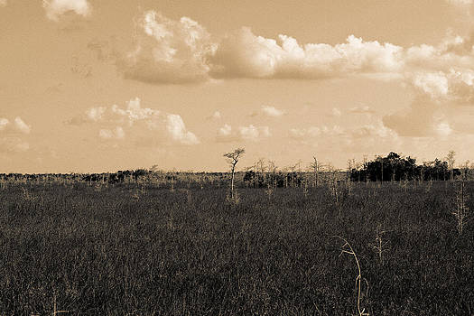 Lone Cypress by Gary Dean Mercer Clark