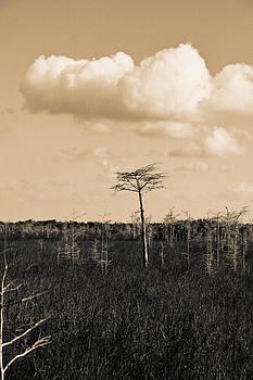 lone cypress III by Gary Dean Mercer Clark