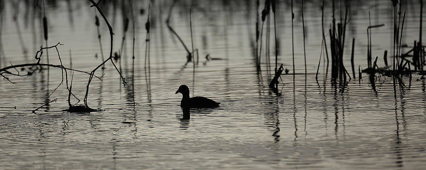 Kevin  Dietrich - Lone Duck