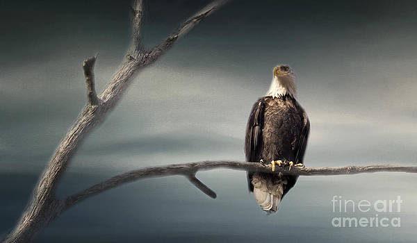 Lone Eagle by Pam  Holdsworth