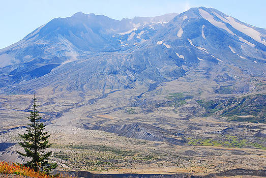 Connie Fox - Lone Evergreen - Mount St. Helens 2012