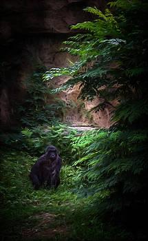 Ray Van Gundy - Lone Gorilla