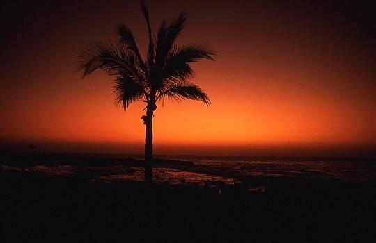 Lone Hawaiian palm by Dave  Abreu