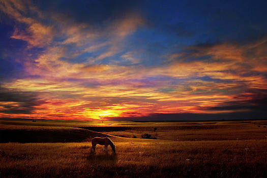 Lone Horse Greenwood County by Rod Seel