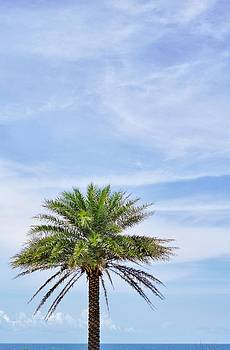Lone Palm at the Beach by Jean Goodwin Brooks