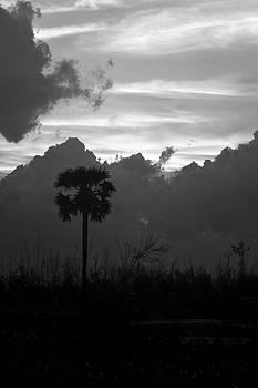 Kantilal Patel - Lone Palm