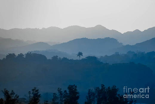 Lone Palm by Kimberly Blom-Roemer