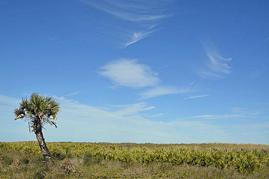 Lone Palm Tree and Blue Sky by Bruce Gourley