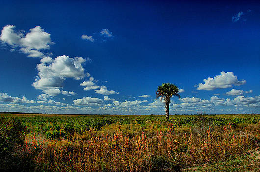 Lone Palm Tree by Thomas Taylor