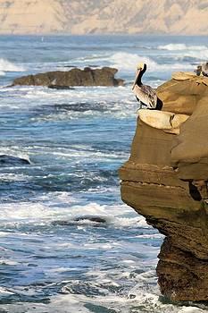 Jane Girardot - Lone Pelican