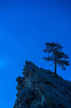 Lone Pine by Mike Hendren