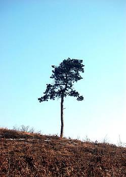 Peter Kallai - Lone pine