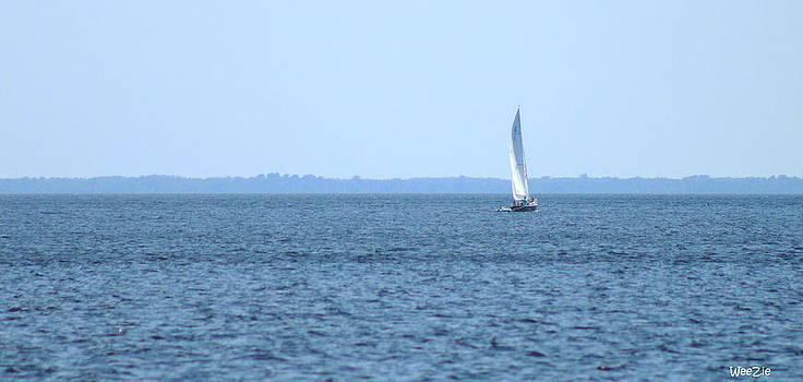 Lone Sailboat by Carolyn Ricks