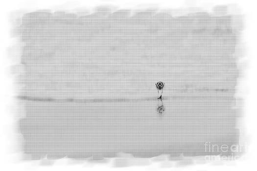Dan Friend - Lone sandpiper on beach
