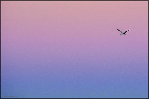 Erika Fawcett - Lone Seagull