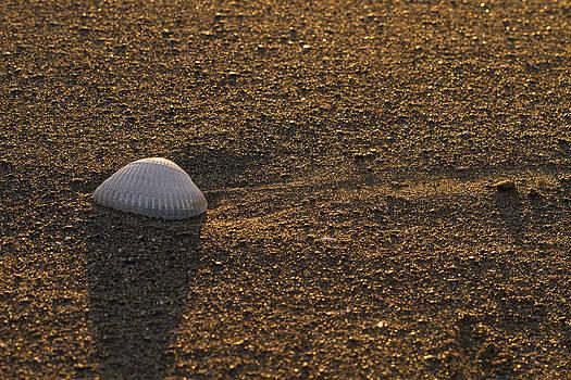 Lone Shell by Gary Larson