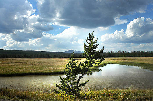 Lone Tree After Slough Creek by Jeffcoat Art
