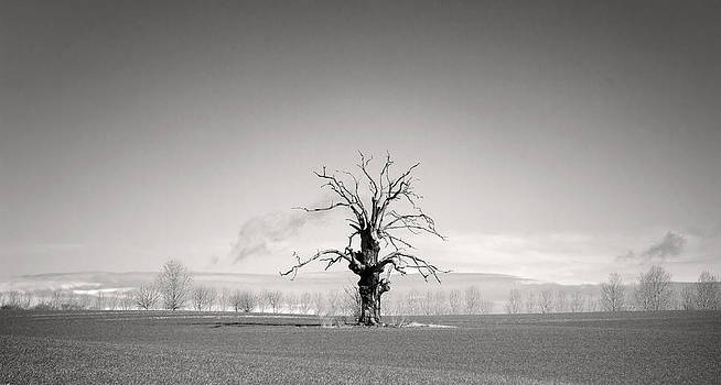 Fizzy Image - lone tree in a field