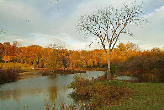 Devinder Sangha - Lone tree in Autumn