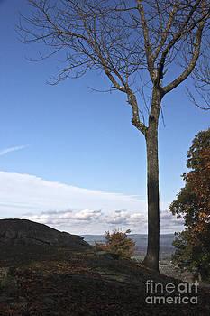 Lone Tree by Jim Gillen