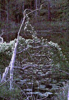 Joe Bledsoe - Lone Tree