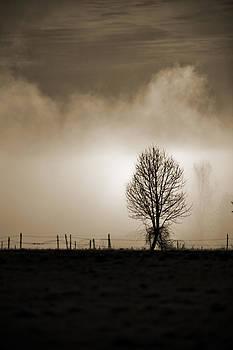 Lone Tree by Joel Moranton