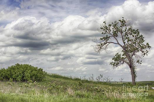 Lone tree by Joenne Hartley