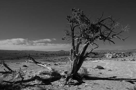 John Daly - Lone Tree