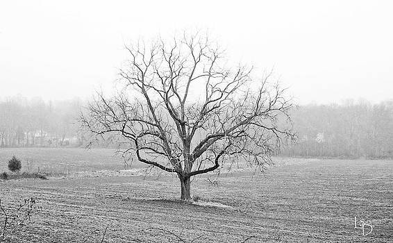 Lone Tree by L and D Design Photography