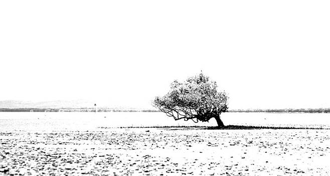 Lone Tree by Lee Stickels