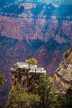 Lone Tree on Outcrop Grand Canyon by Ed Gleichman