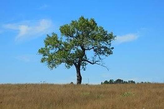 Matthew Winn - Lone Tree on the Niobrara