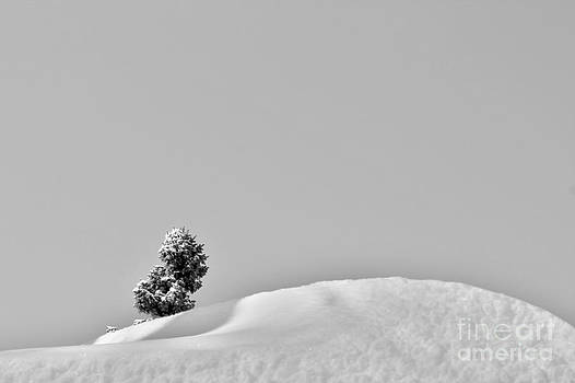 Lone Tree Upon the Snow by Nina Silver