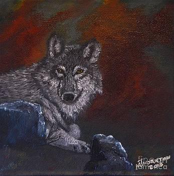 Lone Wolf by Marsha Thornton