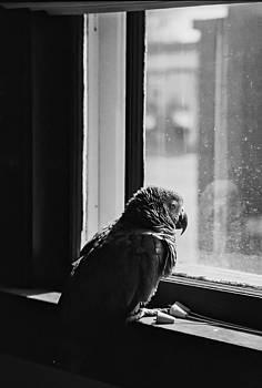 Lonely Bird by Joshua M Schreiber