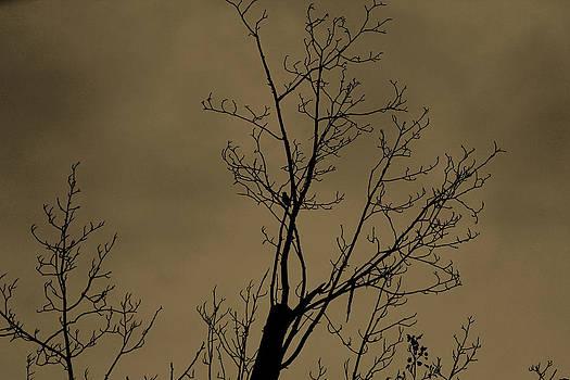 Lonely Bird by Rajkiran Ghanta