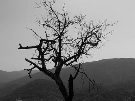 Lonely Burnt Tree by Angela Zafiris