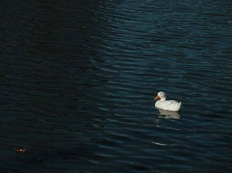 Lonely Duck by Anastasia Gregg