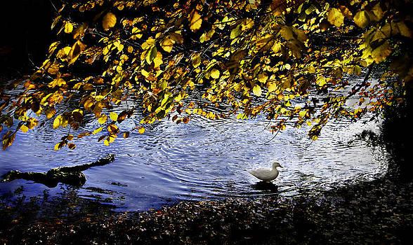 Henrik Petersen - Lonely duck